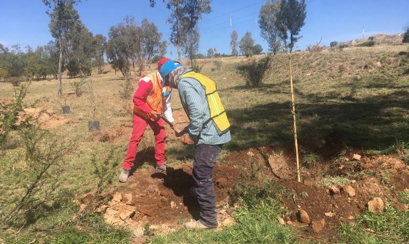 Sanciona Proespa con mil árboles en este 2019