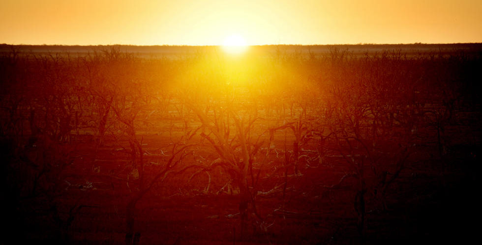 Hasta 45 grados centígrados se sintieron en Australia