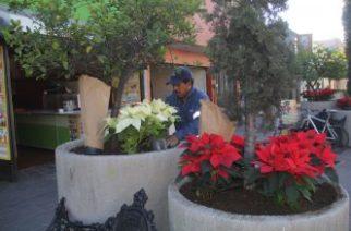 Descartan robos de  nochebuena en parques y jardines de Aguascalientes