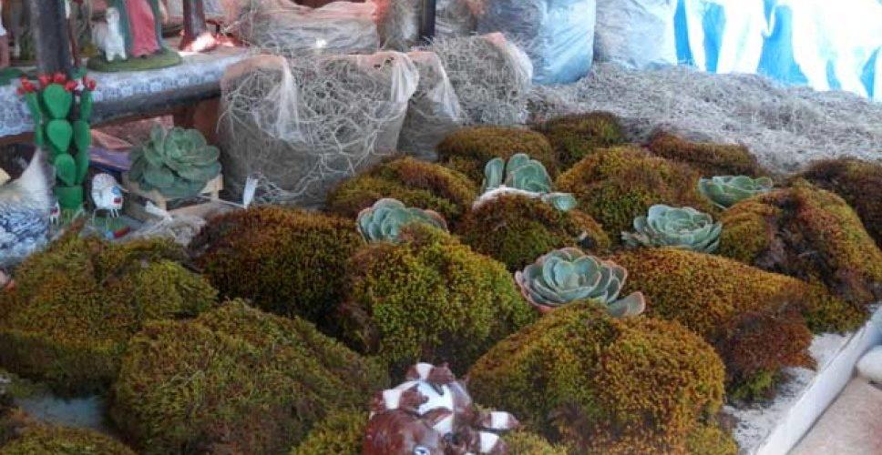 Extracción de heno y musgo genera alto impacto ecológico