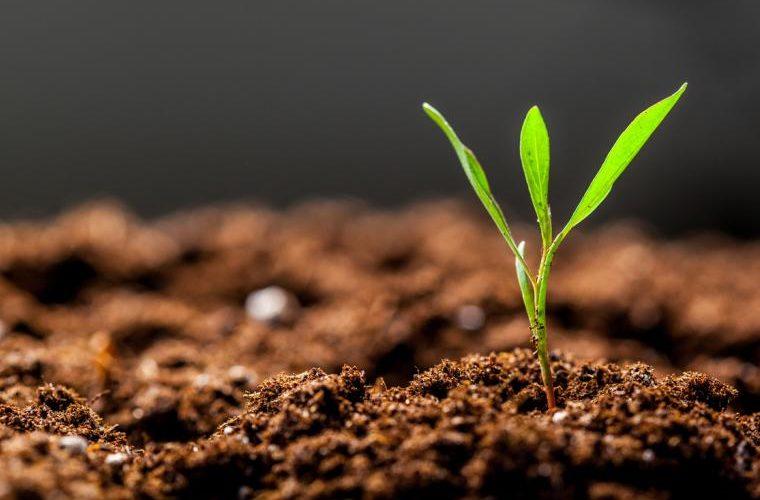 COP25: Modificar la dieta es necesario para combatir cambio climático