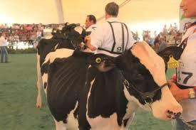 Más de 600 ganaderos y 7 mil productores agrícolas fueron apoyados por gobierno del estado