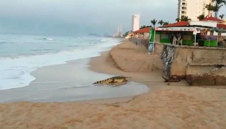 Cocodrilo sorprende a turistas en playa de Mazatlán