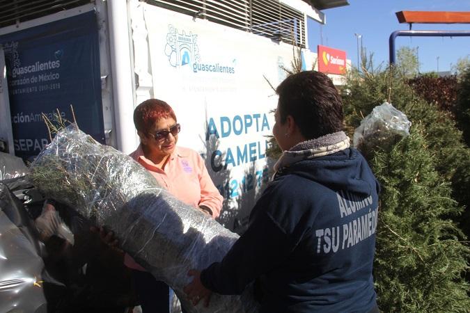 Implementa MuniAgs operativo de acopio de árboles de navidad naturales