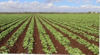El campo se beneficia con las primeras lluvias del año