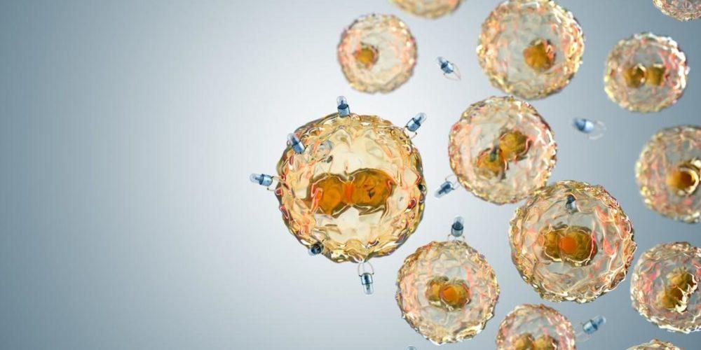 Crean biobots capaces de suministrar medicamentos y recoger microplásticos