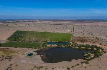 Carlos Lozano riega su gigantesco rancho con pozos propios mientras la región sufre de sequía