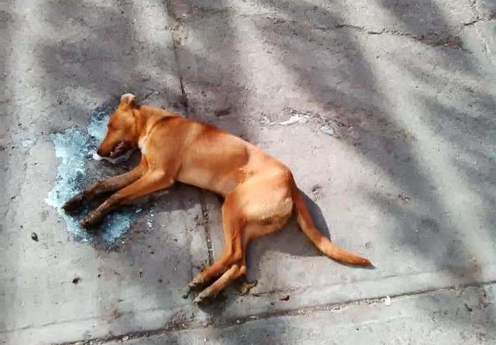 Ofrecen recompensa por envenenadores de perros en Rincón  de Romos