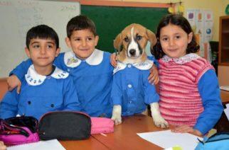 Alumnos y maestros adoptan a perro callejero y hasta lo uniforman