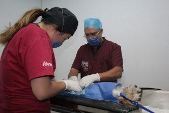 Anuncian primer campaña de esterilización canina y felina
