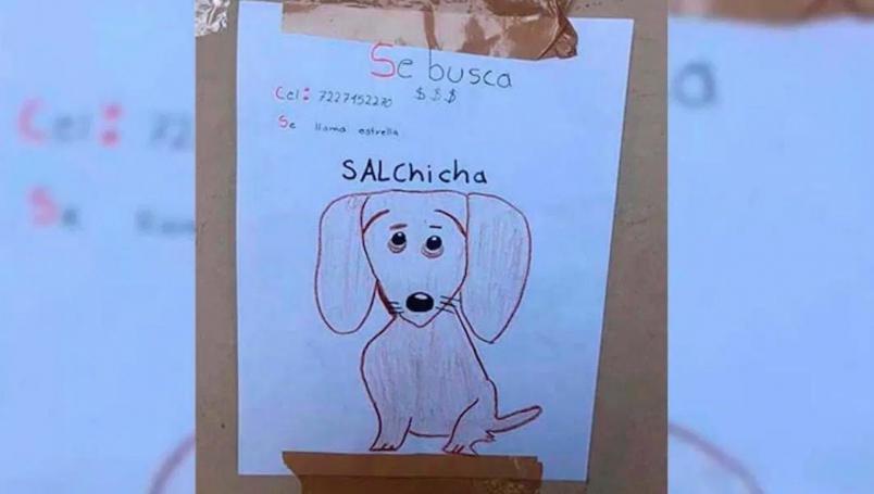 Niño busca a su perrita desaparecida con dibujo