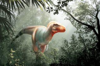 Descubren en Canadá al primo del Tyrannosaurus rex