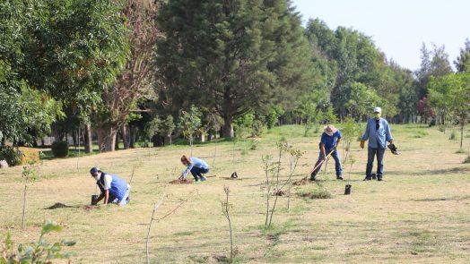 Municipio arranca su programa anual de reforestación