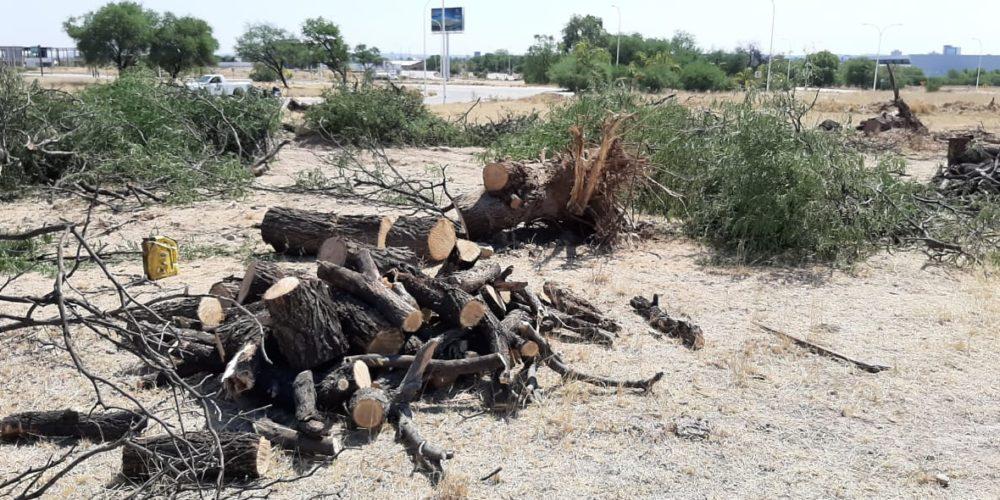 Media docena de talamontes detenidos en Aguascalientes