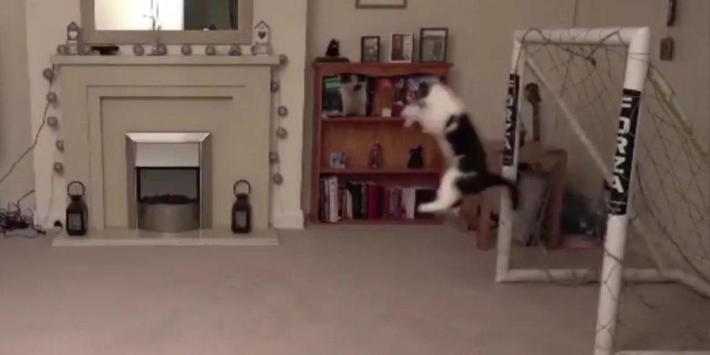 (VIDEO) Este gato es comparado con Manuel Neuer por sus increíbles atajadas