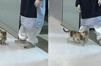 Gatita lleva a su cría a hospital y espera por atención