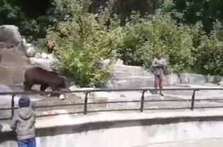 Se pelea con un oso y terminan multándolo por no usar cubrebocas