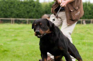 El daño que genera el collar en la salud de tu perro