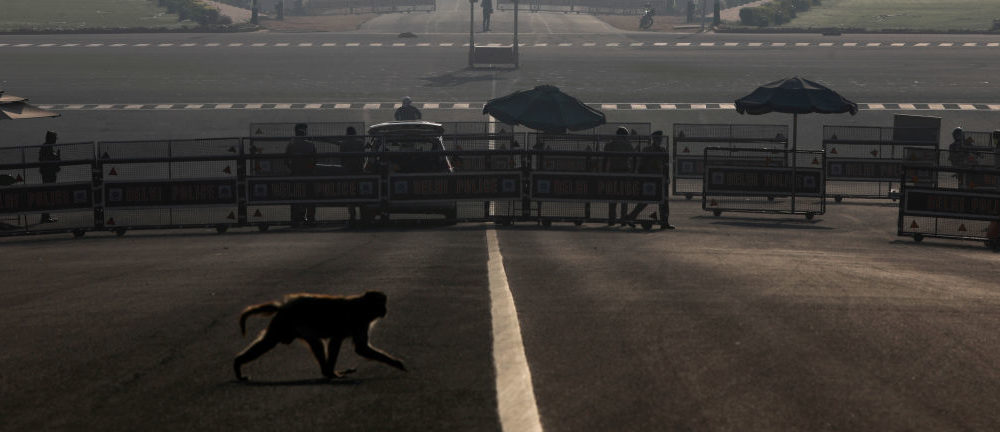 FILE PHOTO: A monkey crosses the road near India's Presidential Palace during a 14-hour long curfew to limit the spreading of coronavirus disease (COVID-19) in New Delhi, India,  March 22, 2020. REUTERS/Anushree Fadnavis/File Photo