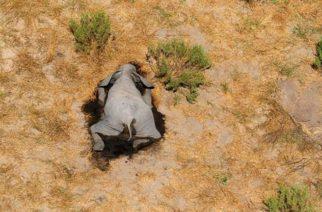 Misterio en Botswana por la muerte repentina de 350 elefantes