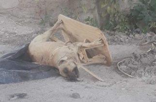 Falta que municipios se involucren en atención del maltrato animal: APA