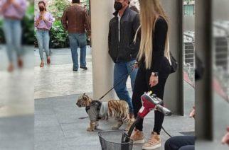 Captan a mujer paseando con cachorro de tigre en la CDMX