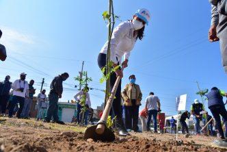 Municipio supera meta de reforestación con más de 20 mil nuevos árboles