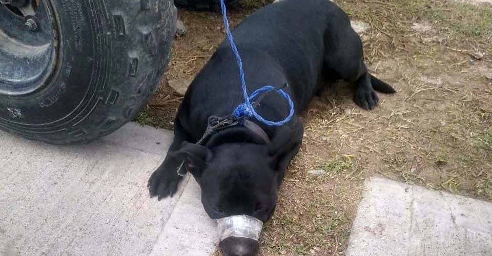 Denuncian maltrato animal en Miradores