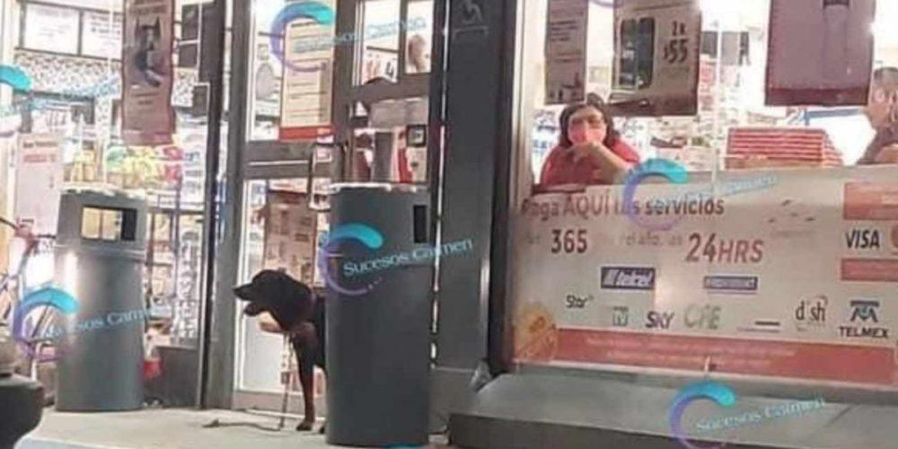 Perro se parapeta en un OXXO