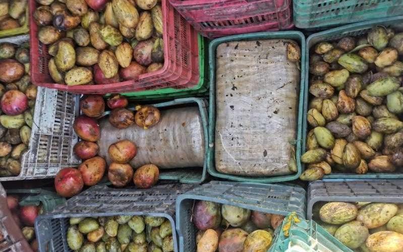 Llevaban más de 400 kilos de mariguana oculta en cajas de mango