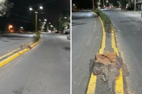 Denuncian tala de árboles en zona centro de Pabellón de Arteaga