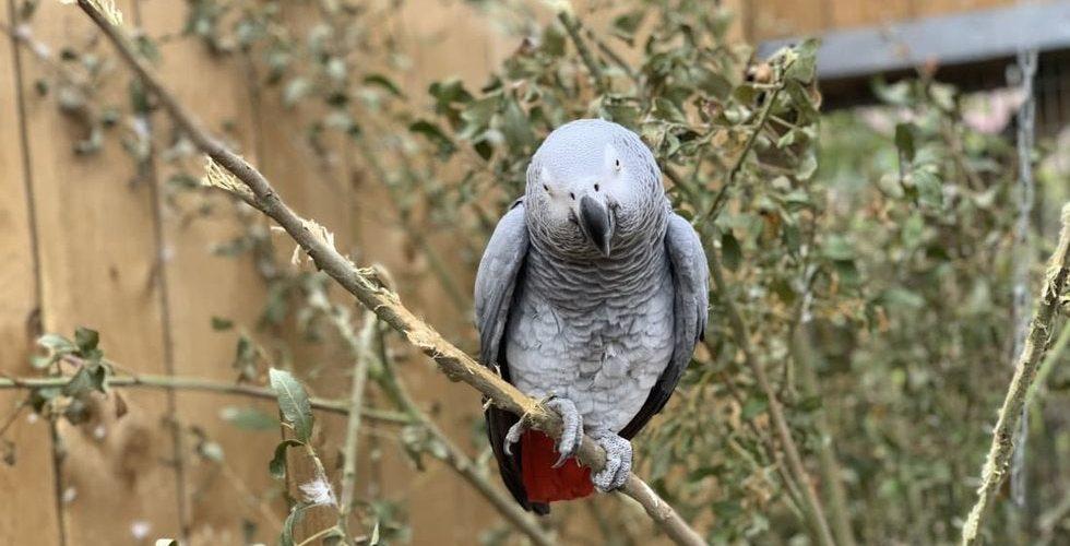 """Aíslan a cinco loros en zoológico de Inglaterra por """"insultar"""" a visitantes"""