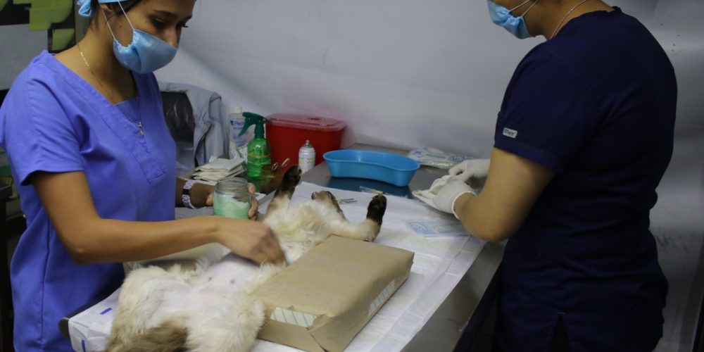Anuncian campaña de esterilización para perros y gatos