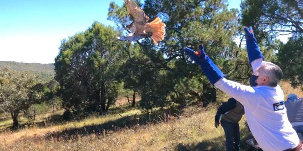 Liberan 51 especies de fauna silvestre en la Sierra Fría