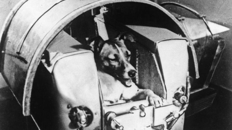 Checa la historia de Laika, la perrita que murió en el espacio hace 63 años