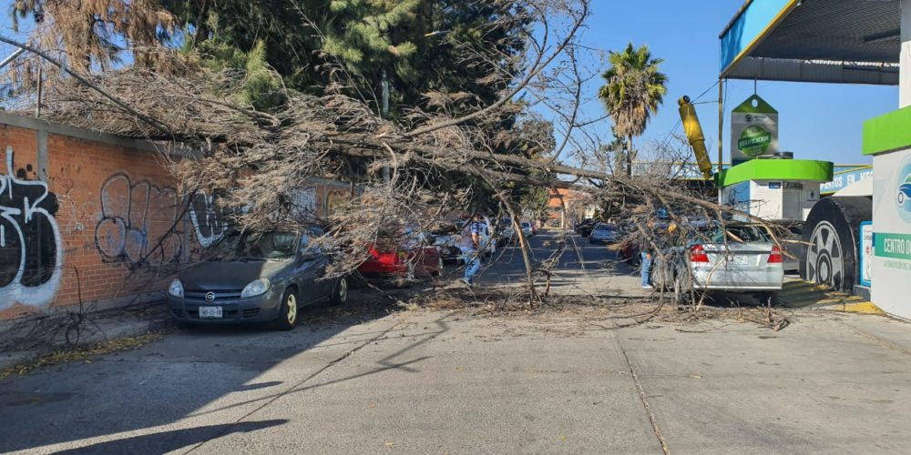 Cae árbol de 15 metros sobre dos vehículos en San Cayetano