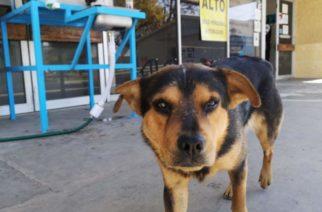 """Perrito espera a su dueño fallecido por COVID-19 y lo nombran """"Covito"""""""