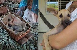 """Adoptan a perrito que durmió en nacimiento por el frío. Ahora se llama """"Jesús"""""""