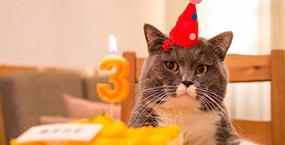 Se contagian 15 de Covid-19 tras asistir a fiesta de cumpleaños de un gato