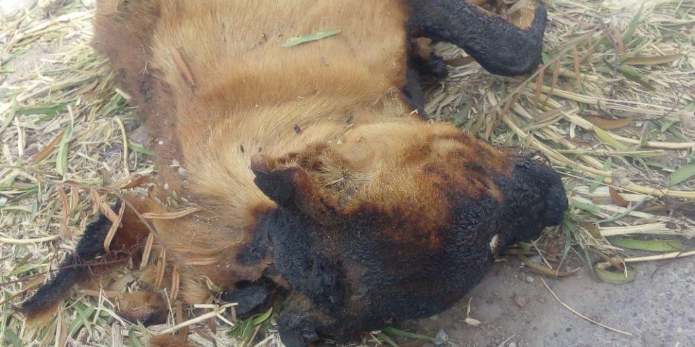 Matan y queman a un perro en VNSA