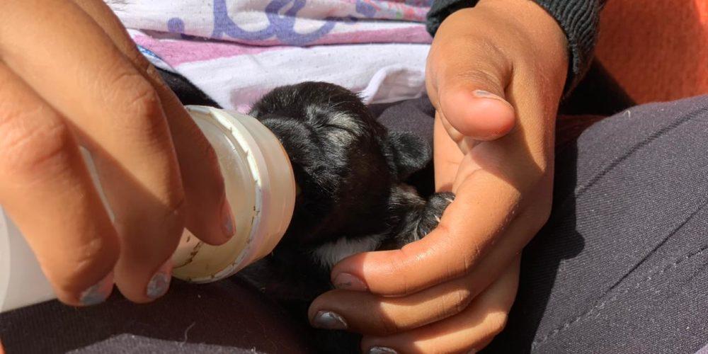 Rescató APA más de 160 animales abandonados o maltratados en Aguascalientes