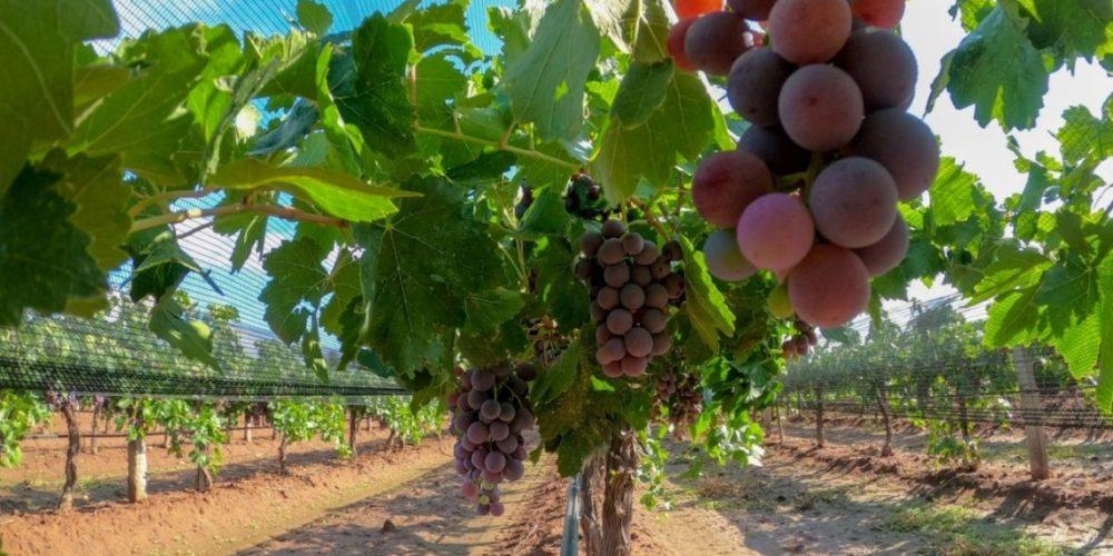 Abren apoyos para el programa de reconversión productiva para agricultores