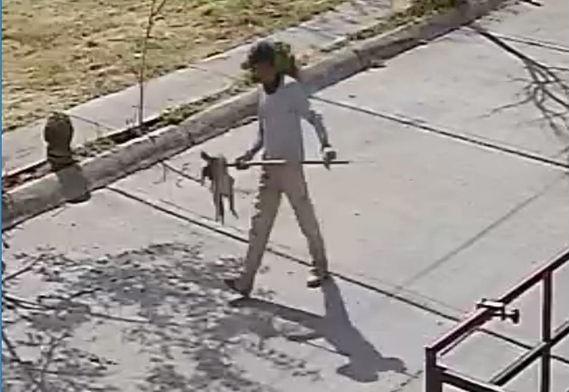 Denuncian a sujeto que clavó palos a un gato en Lomas de San Jorge