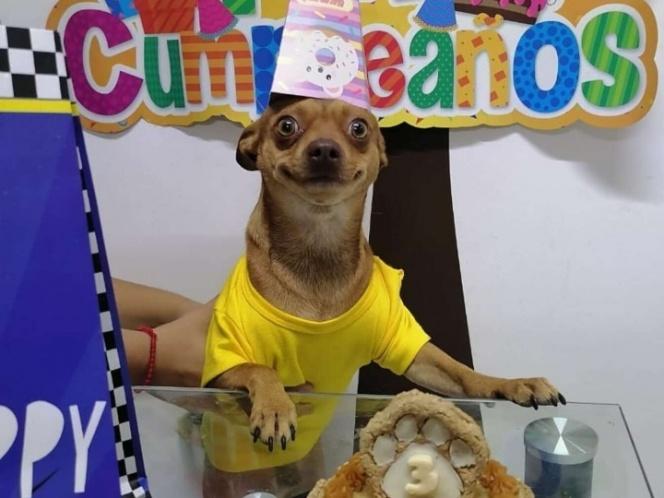 Perrito feliz festejando su cumpleaños conquista el internet