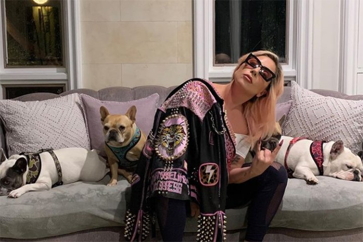 Roban los perros de Lady Gaga y ella ofrece 10 mdp para recuperaros