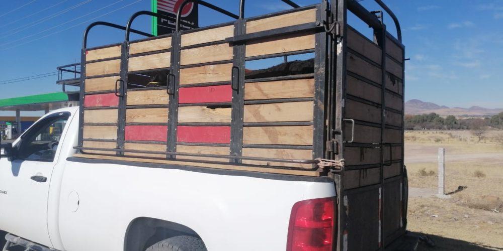 Recuperan ganado que era transportado sin documentación