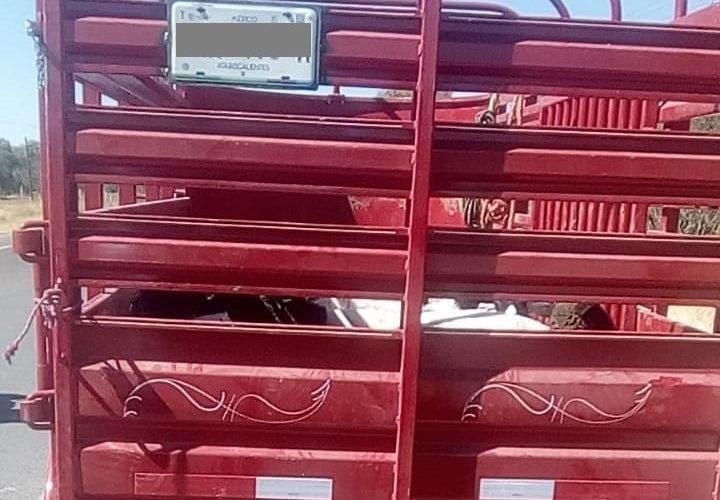 Aseguran ganado presuntamente robado
