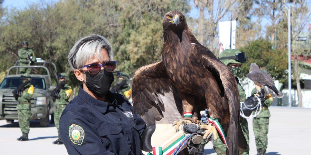 En Aguascalientes se protege al águila real