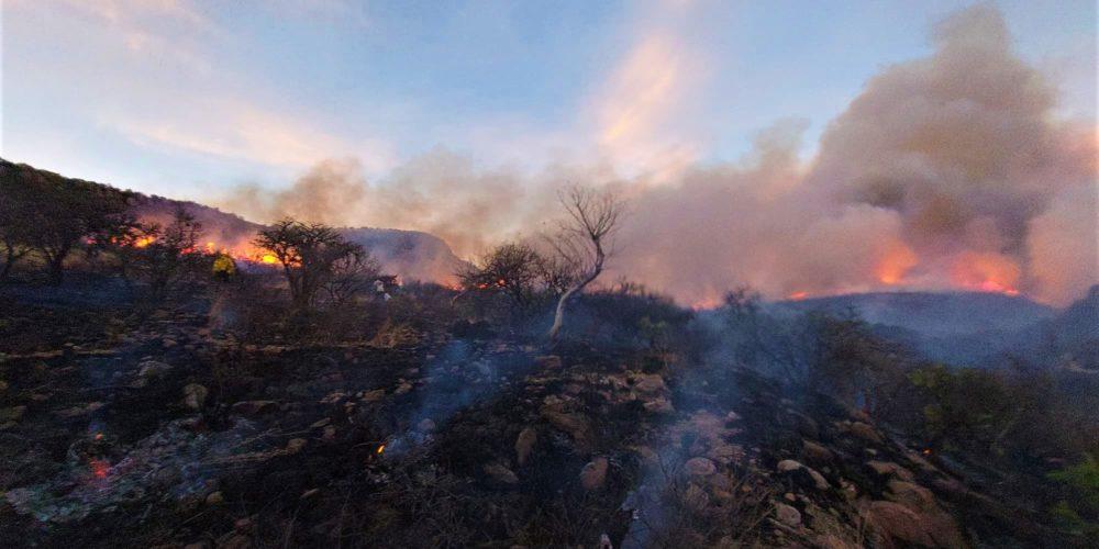 Una fogata pudo originar incendio en La Posta, indica la CONAFOR