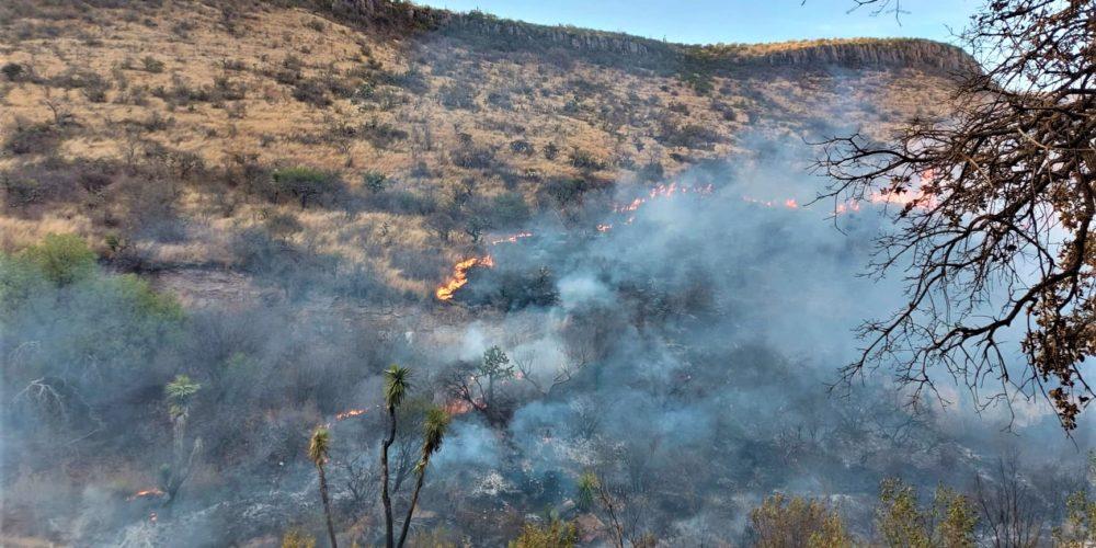 (GALERÍA) Sofocan incendio forestal en La Posta, Jesús María